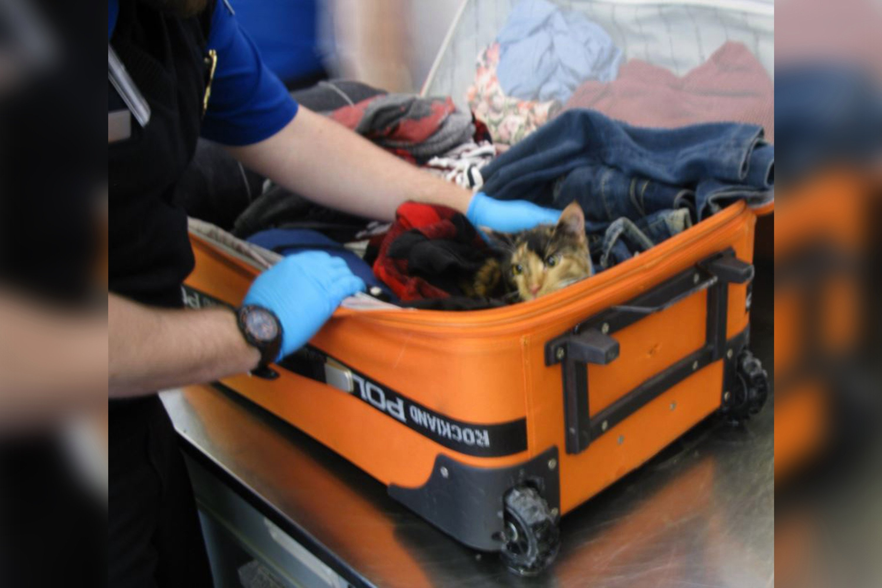 Couple charged with animal cruelty after cat found in luggage