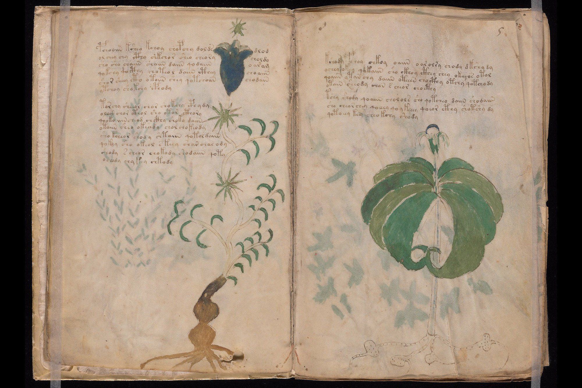 """""""Alien' manuscript from 15th-century decoded using AI"""