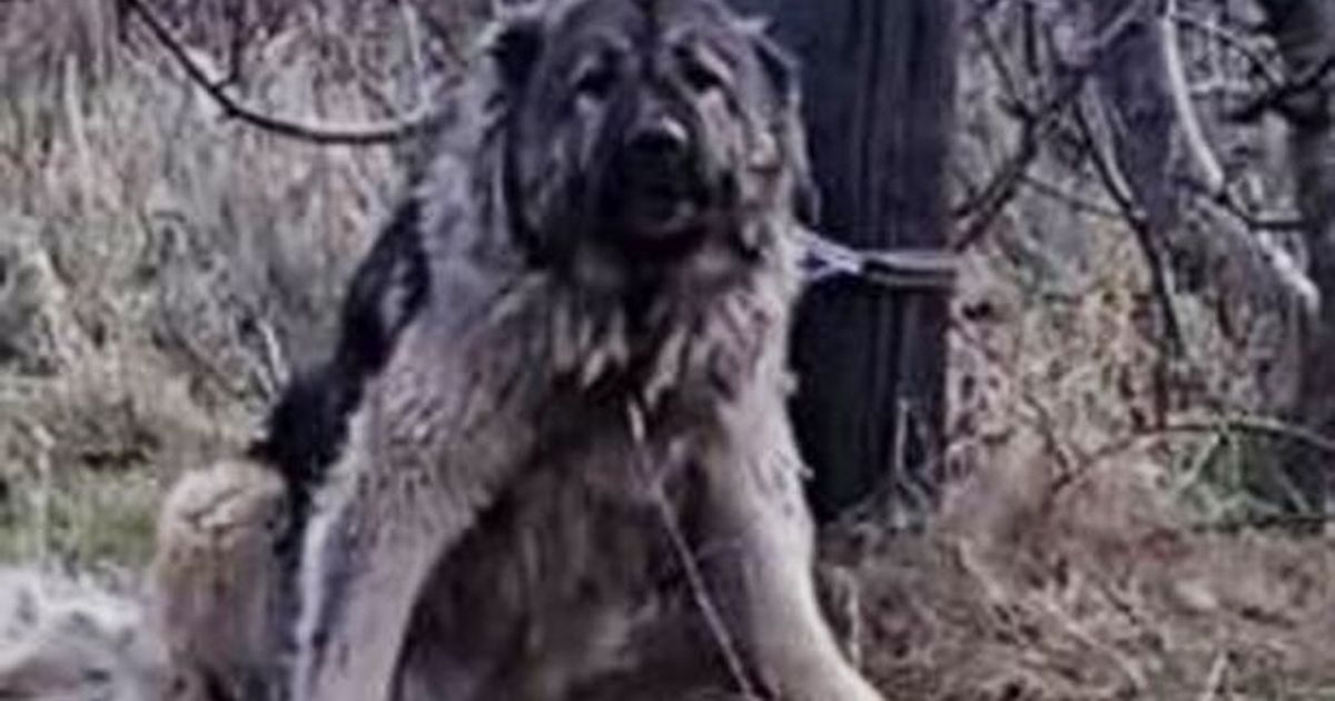 Outrage as police shoot dead dog left tied to telegraph pole in freezing cold