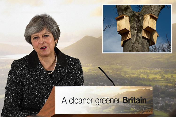 Theresa May reveals she has put boxes for birds, owls and bats in her garden to do her bit as she reveals radical Government plan for the environment
