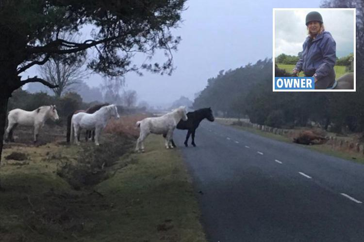 New Forest ponies stand all night over horse killed by motorist and left at roadside
