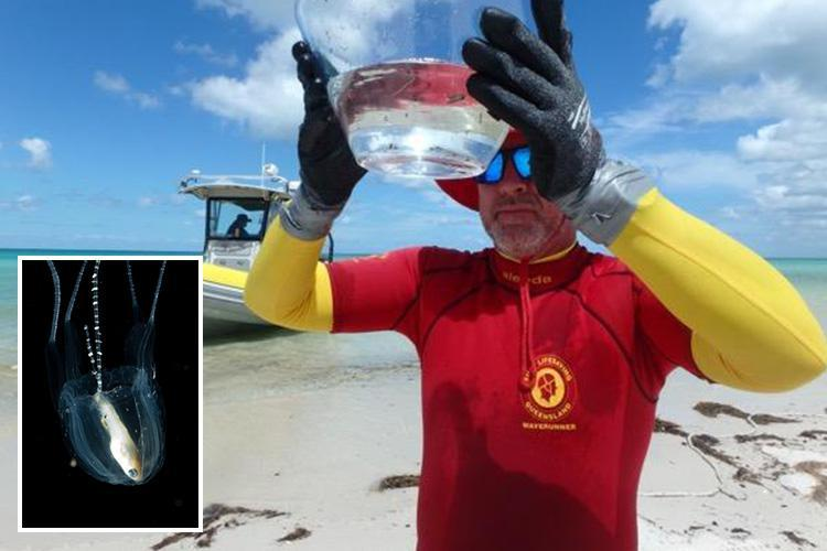 Deadly jellyfish found lurking near Brit holiday hotspot as officials warn visitors to stay out of the water after four people are stung