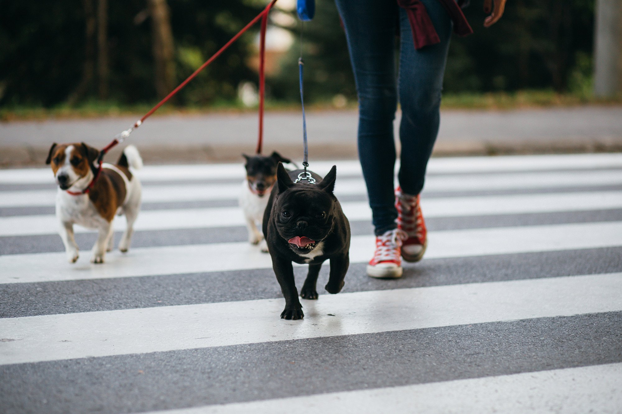 Dog-walking app that lost pooch gets $300M in backing