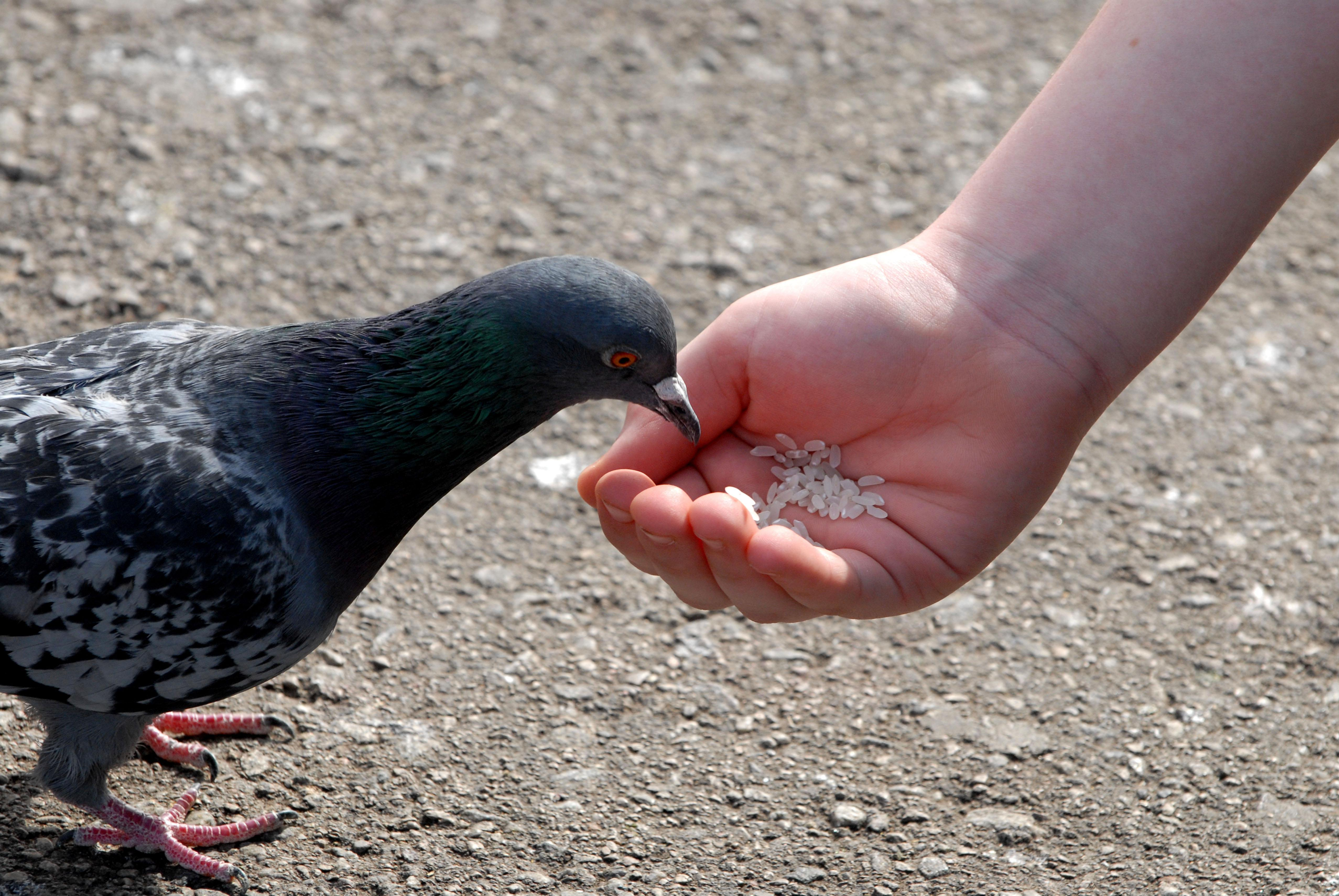 Householders threatened with asbo-style orders for feeding birds and leaving bins out for too long