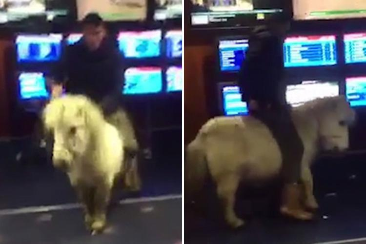 Bizarre moment gambler rides into Limerick betting shop on the back of a Shetland pony