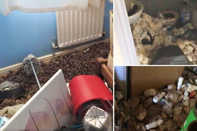 Horrified landlord reveals faeces-covered home with festering rubbish left by horror tenant