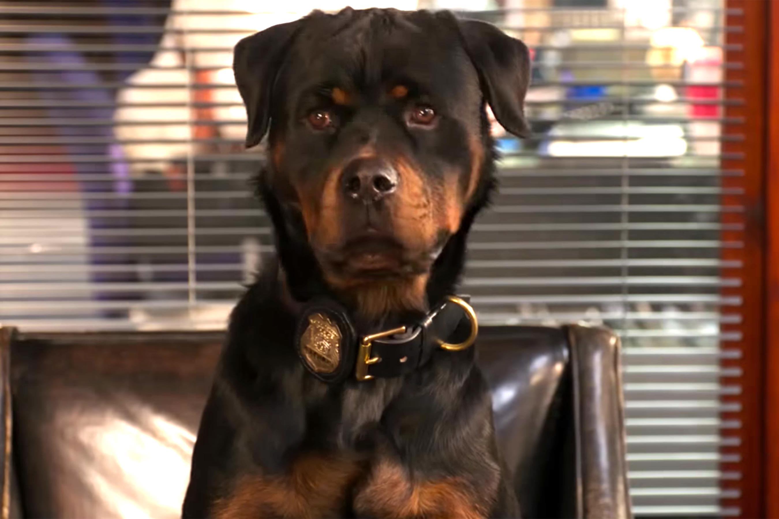 Show Dogs trailer: Watch Ludacris and Will Arnett