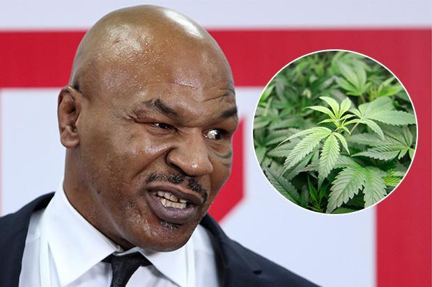 Mike Tyson opens new 40-acre cannabis ranch after California legalises weed