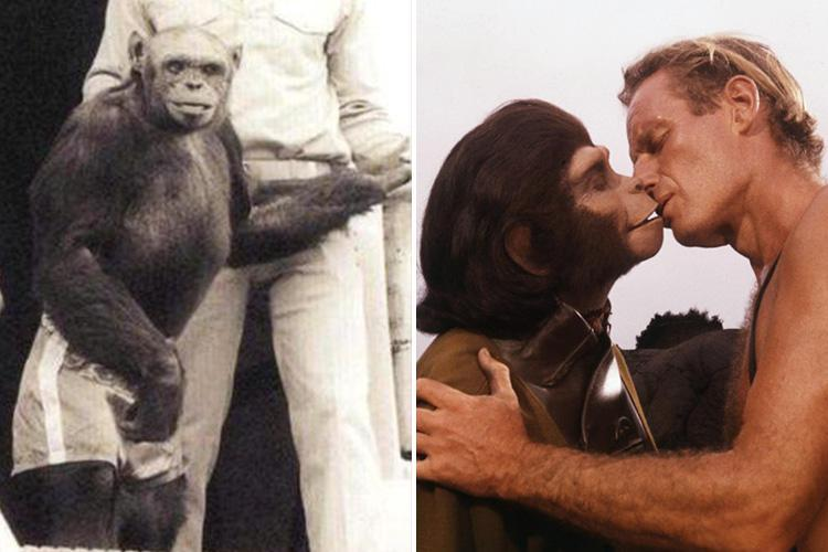 Inside the bizarre world of human-chimp hybrids known as HUMANZEES – as a renowned scientist claims one was born in a Florida lab before being killed by panicked doctors