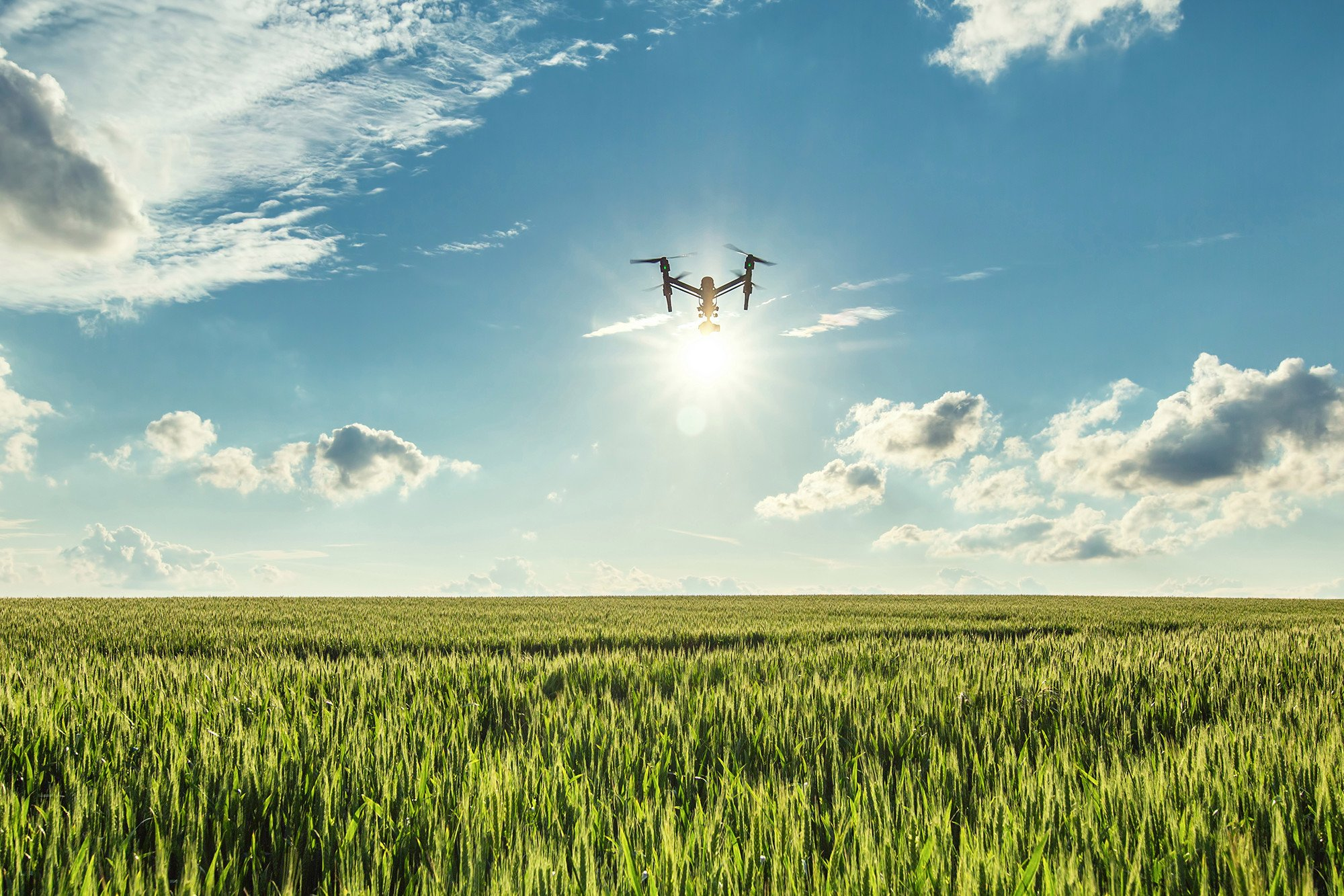 The future of human life could be saved by tree-planting drones