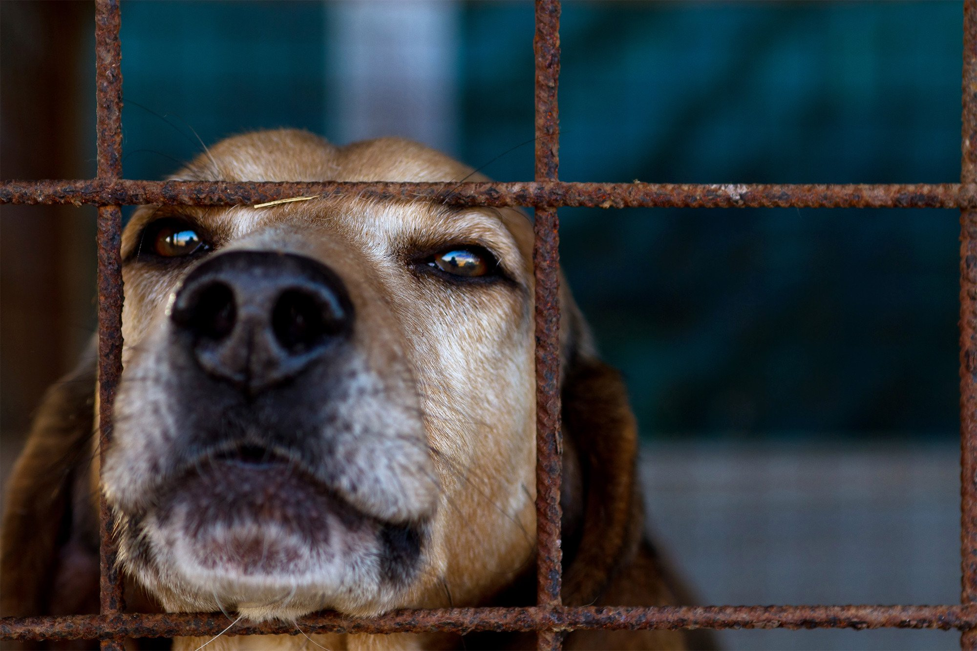 Brutal dog meat farms expose Olympic underbelly