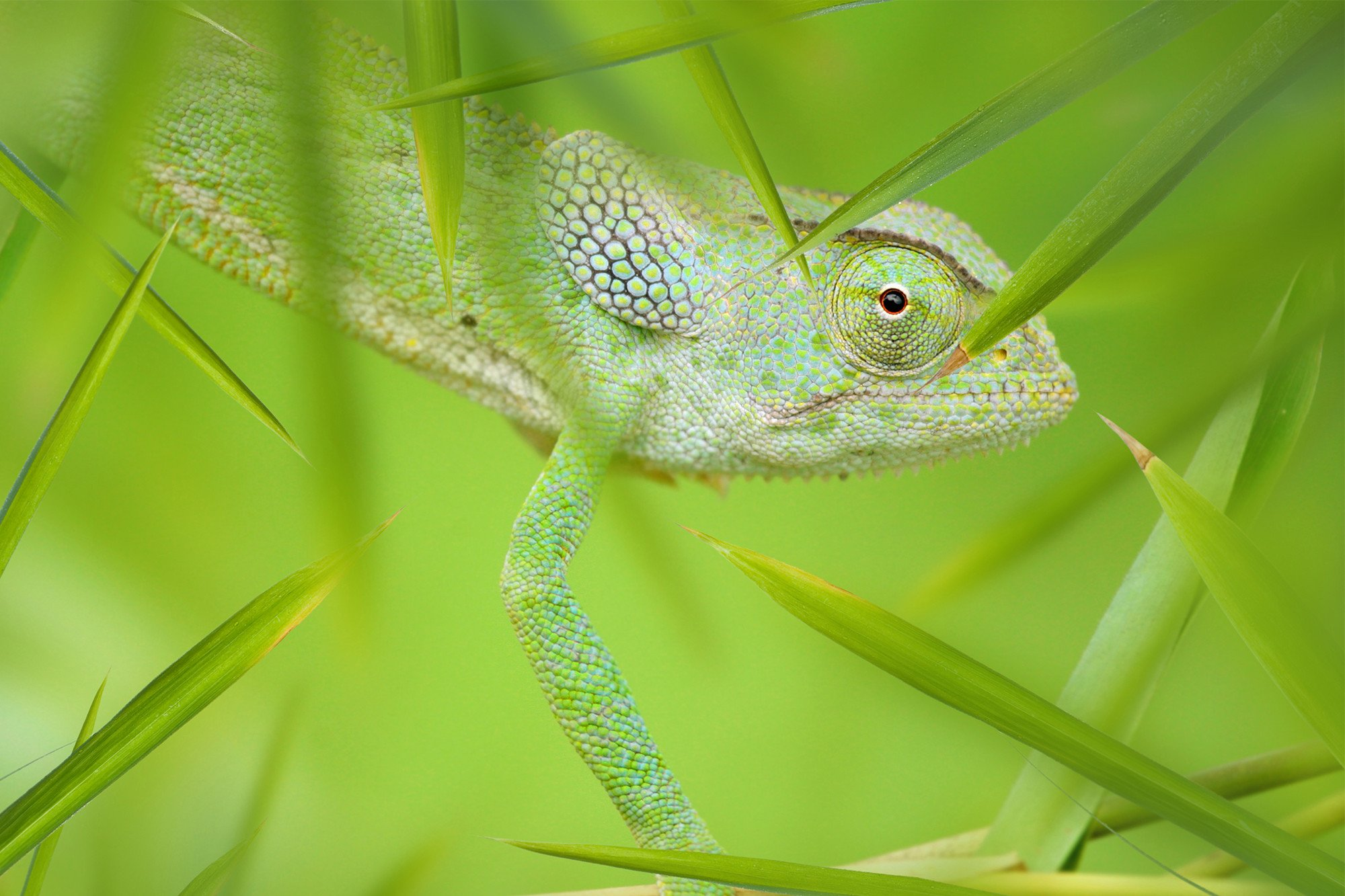 Ex-Iran military leader: Western nations use lizards to spy