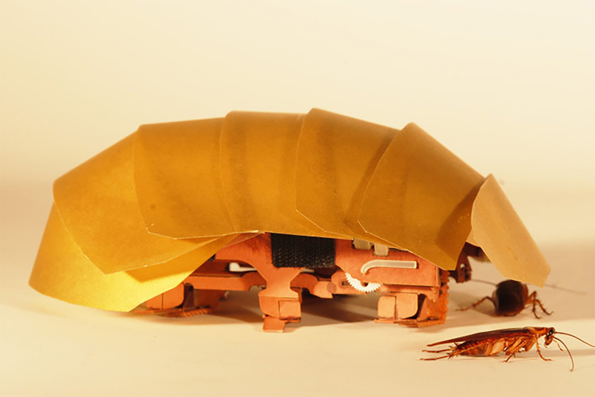 "These mechanical ""cockroaches' could be the future of robotics"