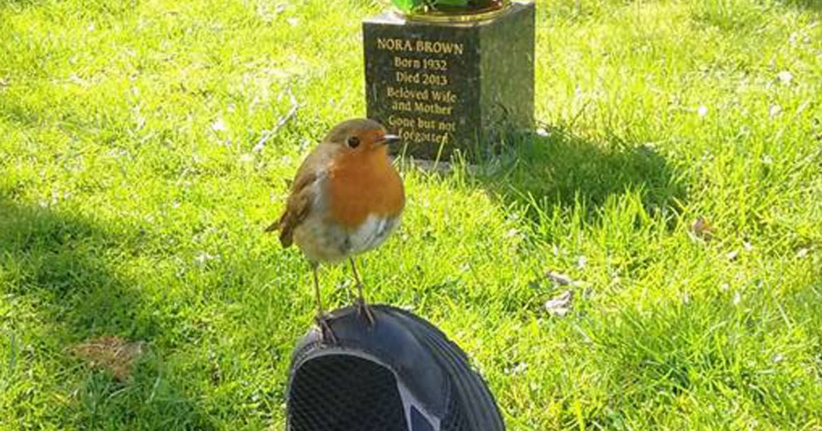 How robins 'proved' loved ones are still with their grieving family after death