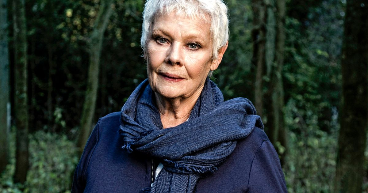 Dame Judi Dench has a runner in Grand National after falling in love with sport