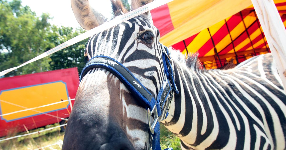 Wild animals are finally getting banned from circuses