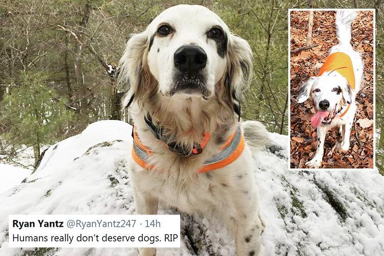 Heartfelt tributes for 'hero' dog Pete who died saving owner from freak BEAR ATTACK in New Jersey