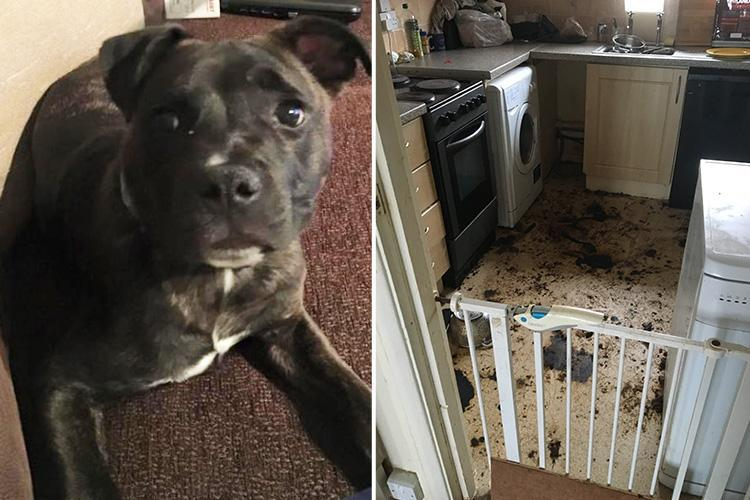 Dog forced to eat his own fur while starving to death when its owner 'moved homes and left him behind in an empty flat'