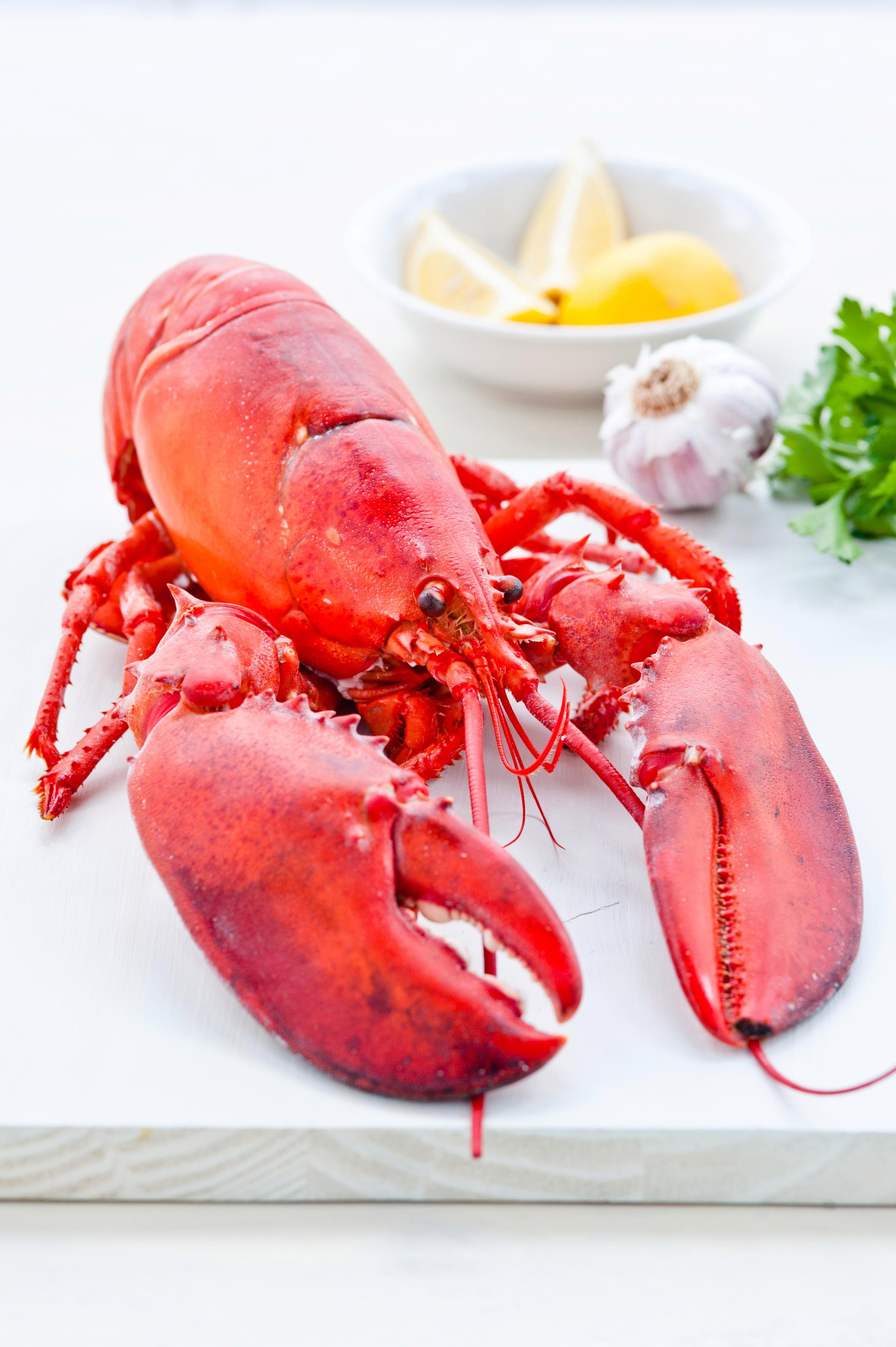Switzerland makes boiling live lobsters illegal 'because they feel pain'