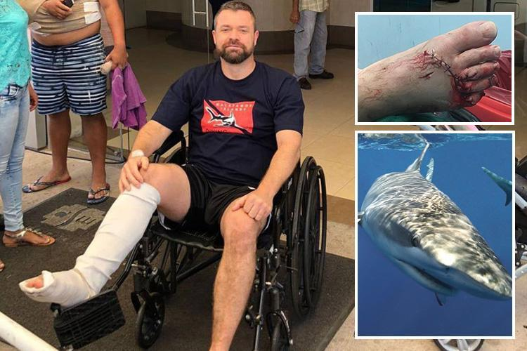 Brit businessman fights off 13ft SHARK by punching it as it mauls his foot during snorkelling trip off the Galapagos Islands