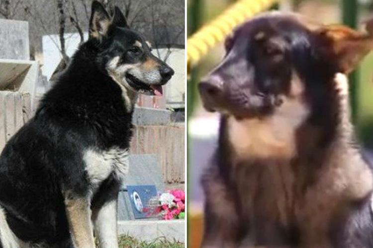 Faithful dog dies next to his master's grave after refusing to leave for 10 years