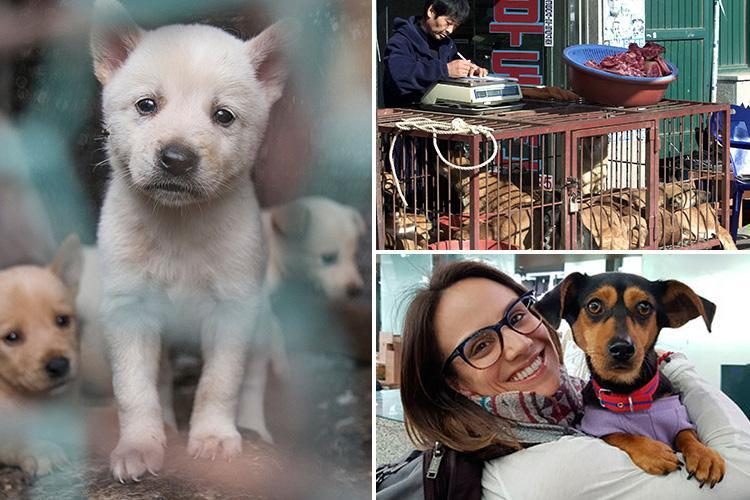 Dog meat soup is sold near Winter Olympics stadium spurring athletes to help save pups from slaughter