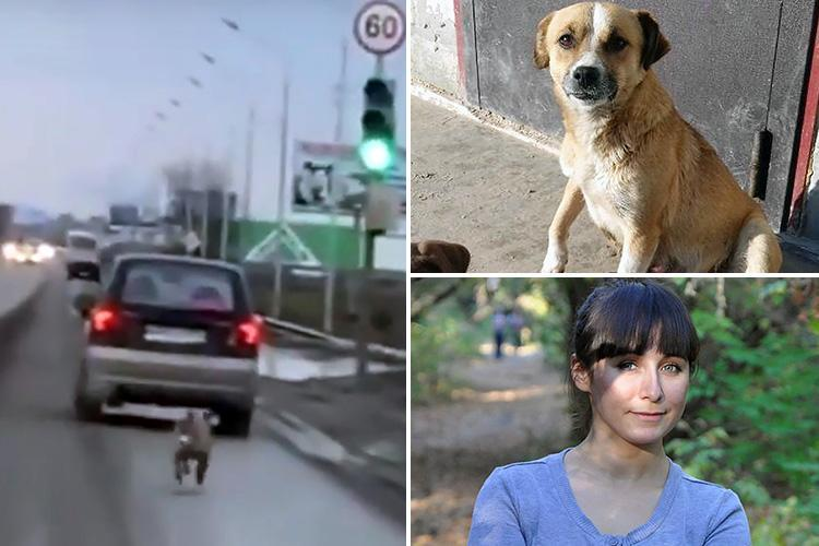 Heartbreaking moment abandoned dog chases after her owner's car for miles after being dumped in the woods