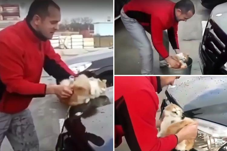 Cruel driver filmed using a stray cat as a sponge to wash his Mercedes… and even dunks the kitty in a bucket