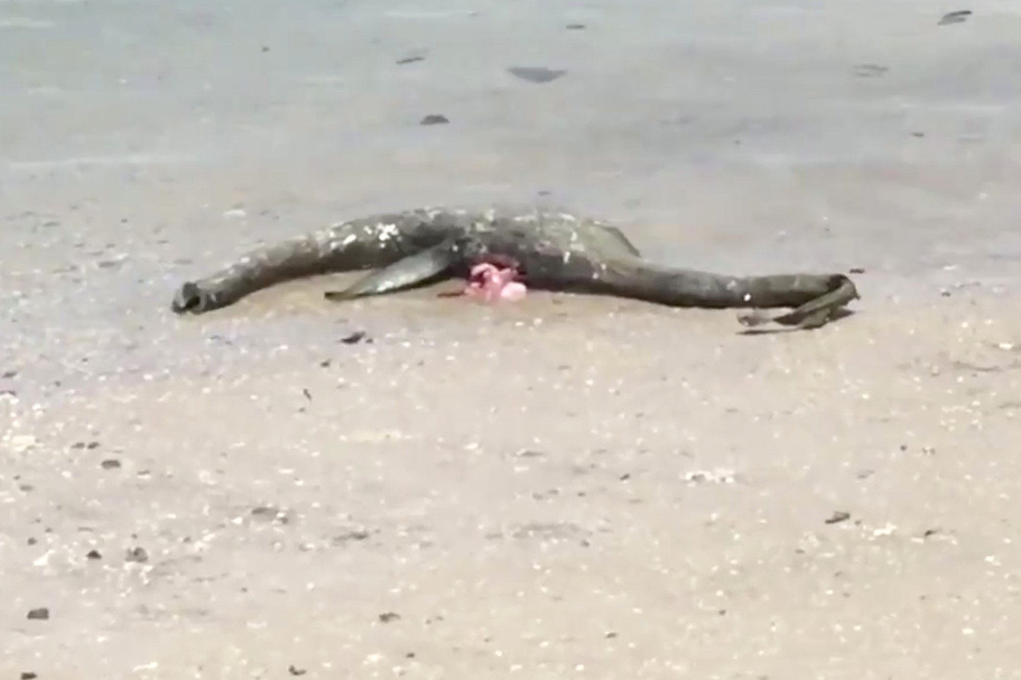 'Loch Ness Monster' washes up on Georgia beach