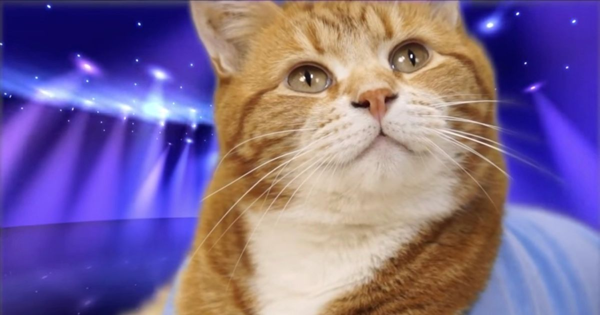 Bento the Keyboard Cat – who stunned millions with his musical talent – has died