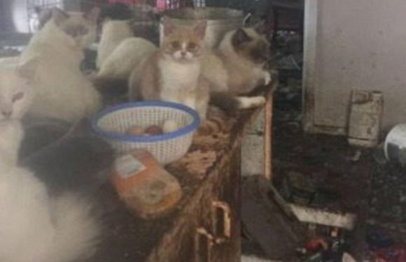 Horror home where woman kept dozens of dogs and cats in 'worst conditions ever'