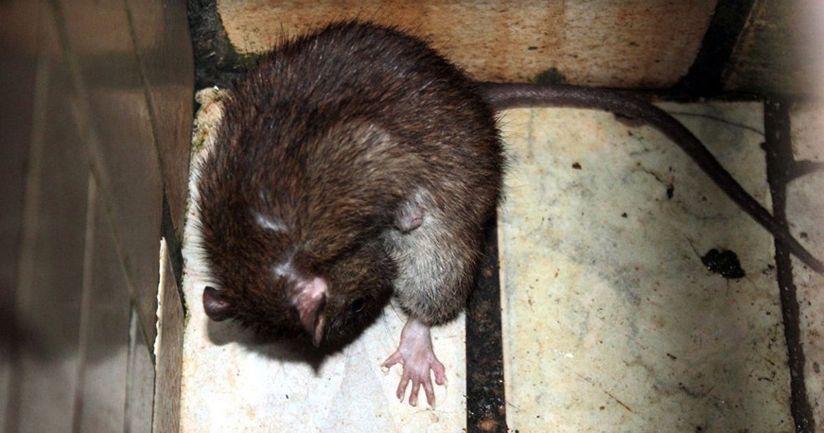 Squalid women's prison infested with giant rats that bite and attack inmates