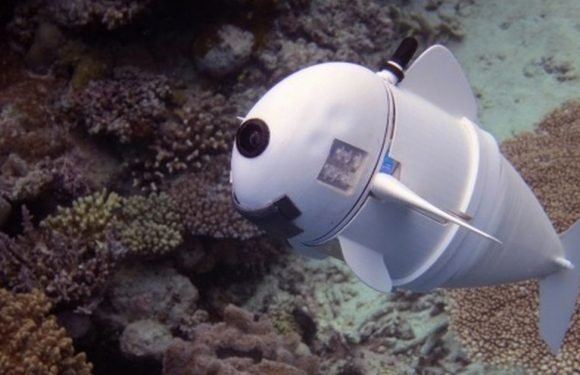 Scientists develop a robotic fish that can record marine life