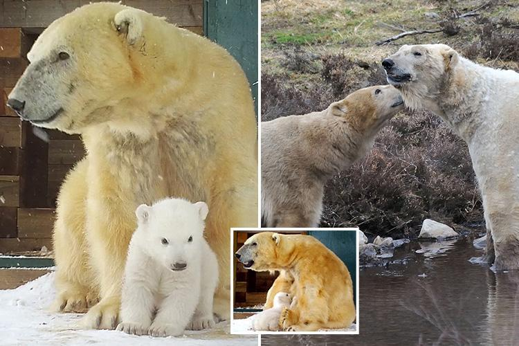 How Brit zookeepers taught polar bears how to have sex – and delivered the UK's first polar bear baby in 25 years
