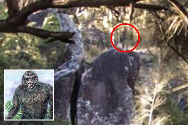 Hiker claims he's captured photo of a YOWIE – the mysterious Australian version of a yeti – at an ancient massacre site