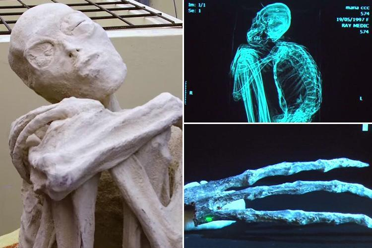 Mysterious three-fingered skeleton found in Peru are NOT human, researchers claim sending alien conspiracy theorists into a frenzy