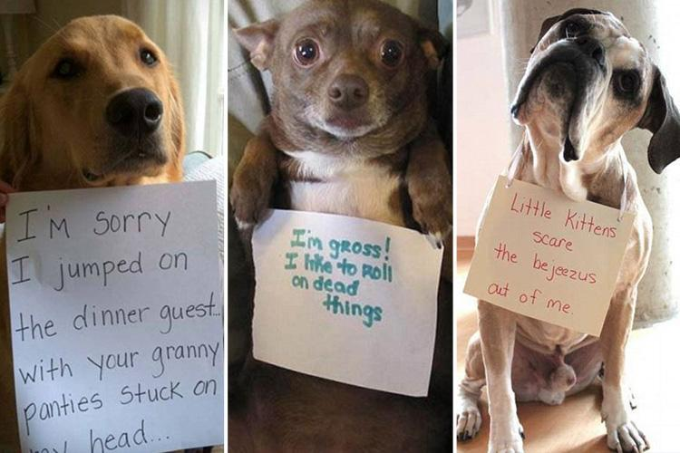 Naughty pups hilariously 'shamed' by owners who've finally had enough of their antics