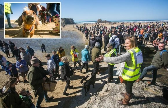 World record sausage dog event slammed by posh Cornish locals after town left 'smelling of WEE'