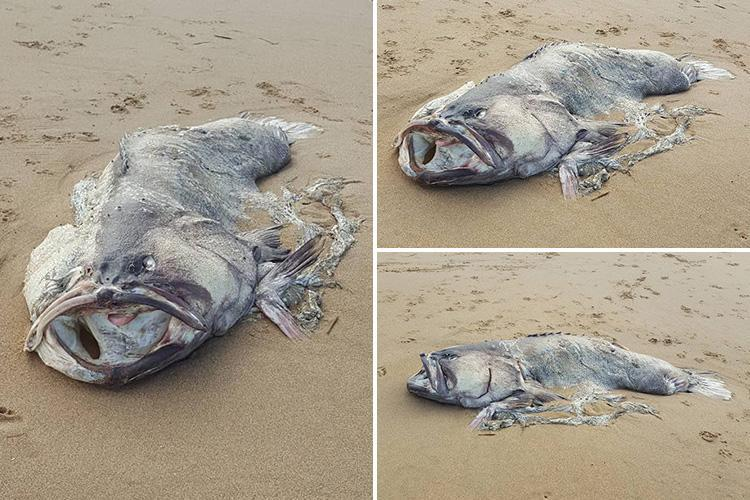 Mysterious sea monster weighing 24-STONE baffles locals on beach