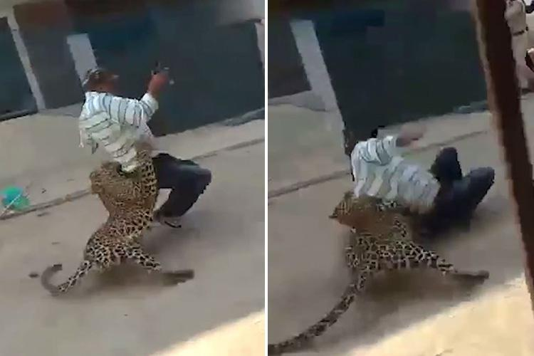 Terrifying moment crazed leopard savages man in three-hour rampage through Indian city