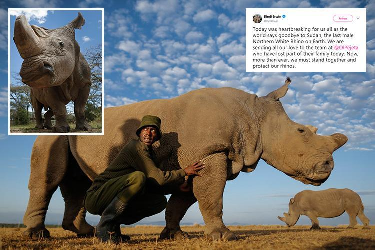 World's last male northern white rhino Sudan dies of 'age-related complications'