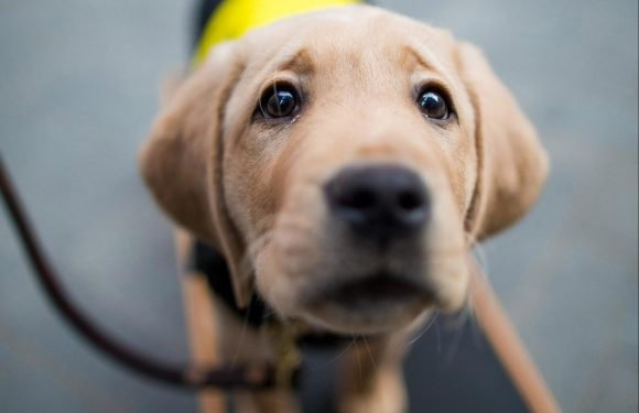 One in ten puppy owners dump their pet after just a month, research claims