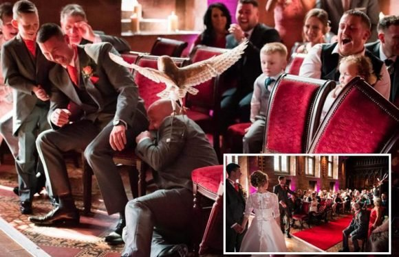 Hilarious moment furious owl attacks best man during lavish wedding ceremony at Cheshire castle