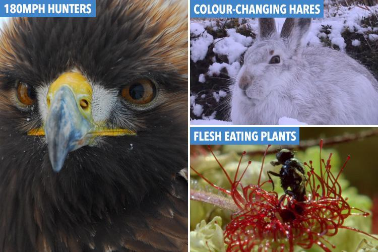 From colour-changing rabbits to flesh-eating plants… the most incredible British wildlife right under our noses