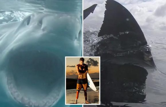 Brave snapper faces great white shark … 20 years after another one chewed his leg off