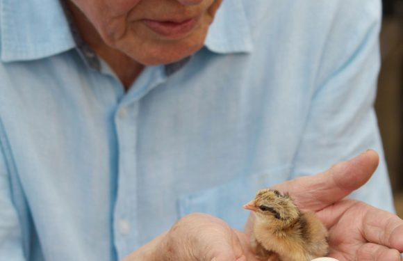 What's on TV tonight? Shows to watch on Saturday 31 March from Attenborough's Wonder of Eggs to Ready or Not