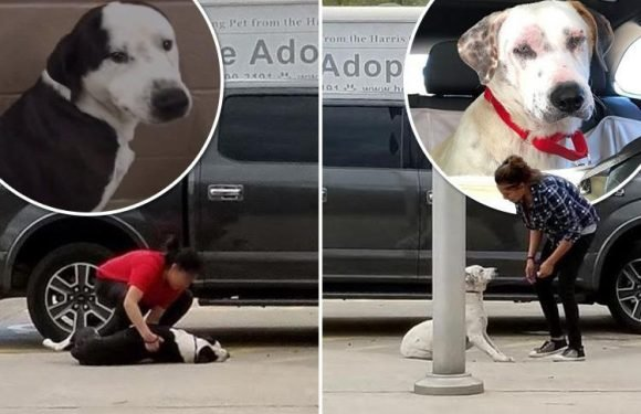 Heartbreaking moment dogs refuse to get up so owners can take them 'to be put down'