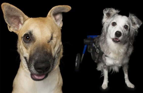 These disabled dogs will melt your heart