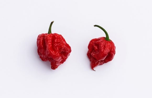 Chili grower defends world's hottest pepper after man hospitalized