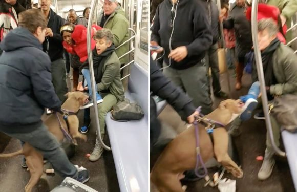Pit bull's owner blames victim for subway attack